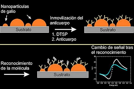 1 / 1 Inmovilización del anticuerpo sobre las nanopartículas de galio, y detección de la molécula correspondiente