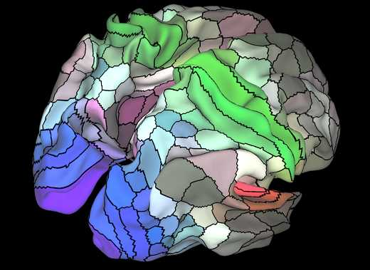 mapa-corteza